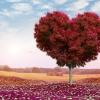 yogafaith heart chakra